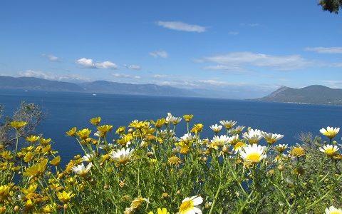 Греция весной. Остров Эвбея. Фото май 2015 г.